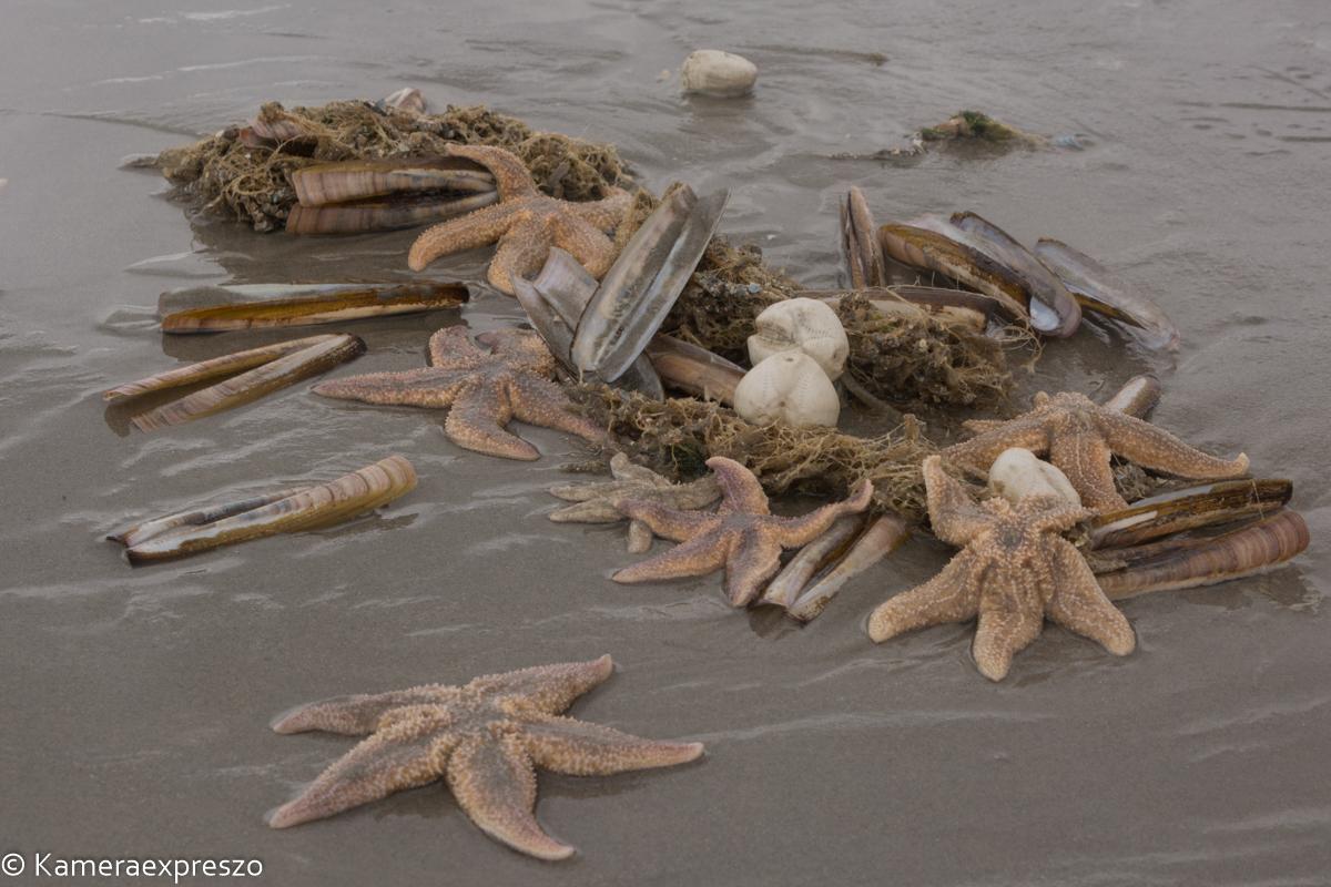 rob wander fotografie Schiermonnikoog zeesterren branding keznl