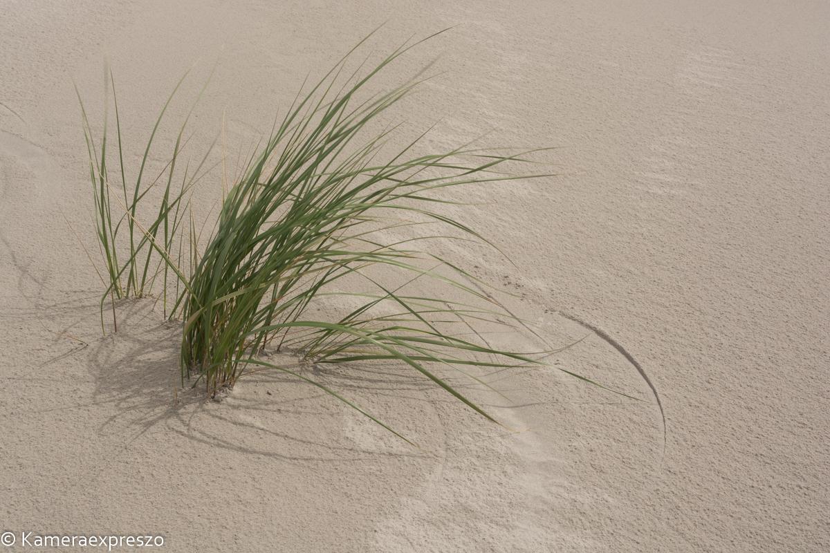 rob wander fotografie Schiermonnikoog helmgras snijdt zand keznl