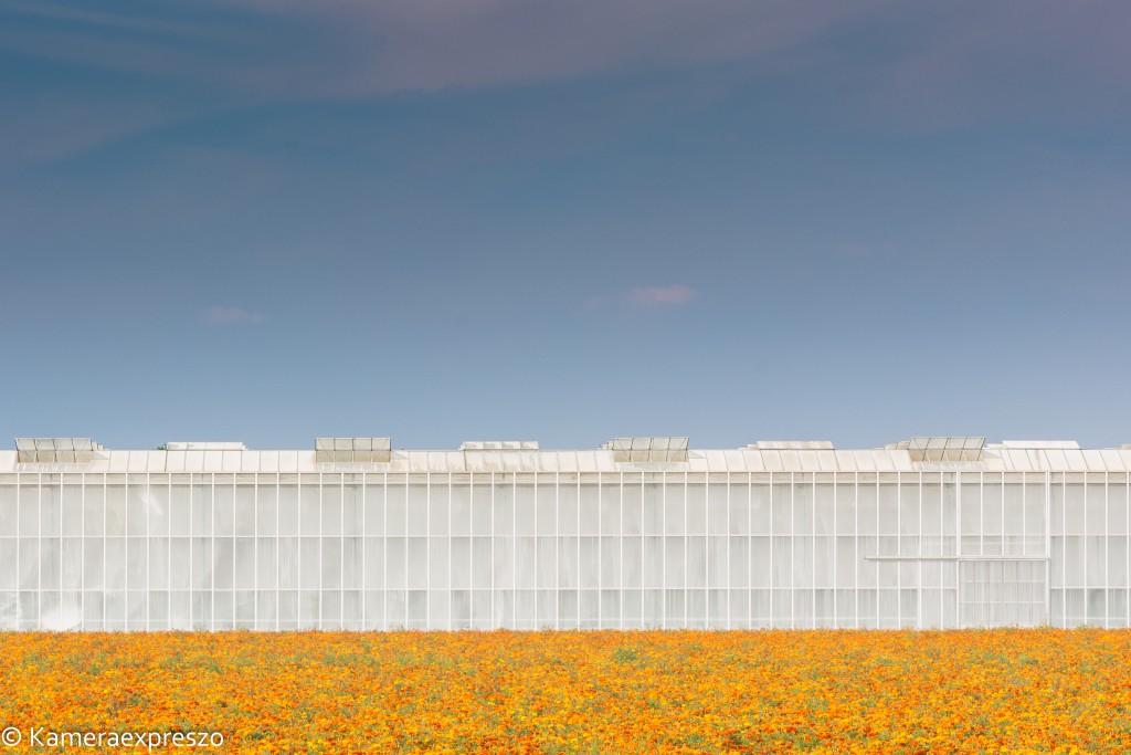 Bloemen voor de kas met lucht als negatieve ruimte rob wander fotografie kameraexpreszo.nl keznl
