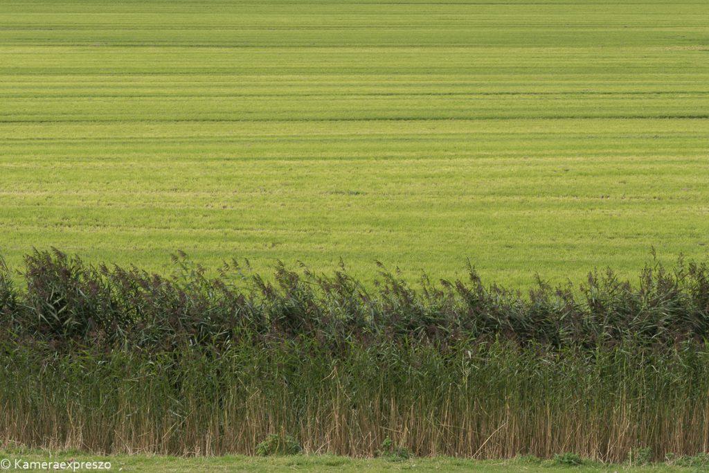 vers gemaaide leegte rob wander fotografie kameraexpreszo.nl riet gras