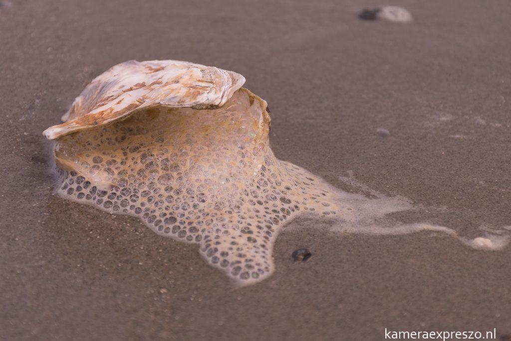 rob wander fotografie kamera expreszo.nl aan de kust
